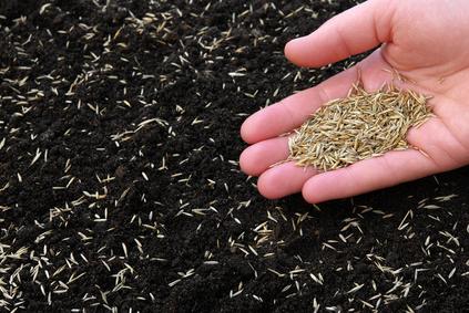 Rasen Saen Rasenpflege Von A Bis Z